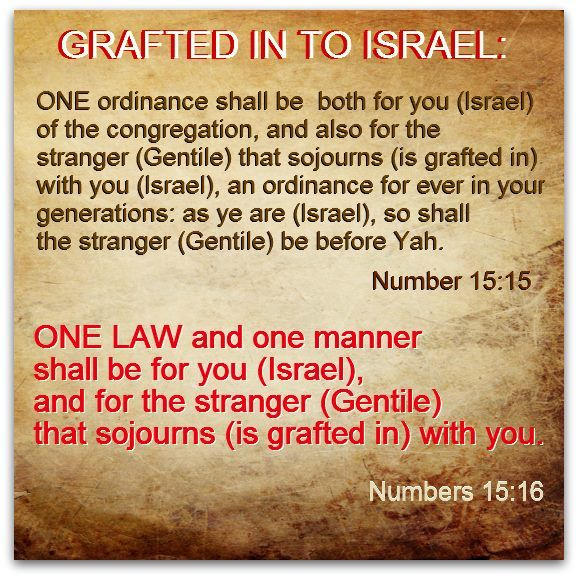 one law for israel, grafted in... image.jpg