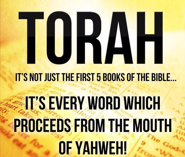 torah-image.jpg