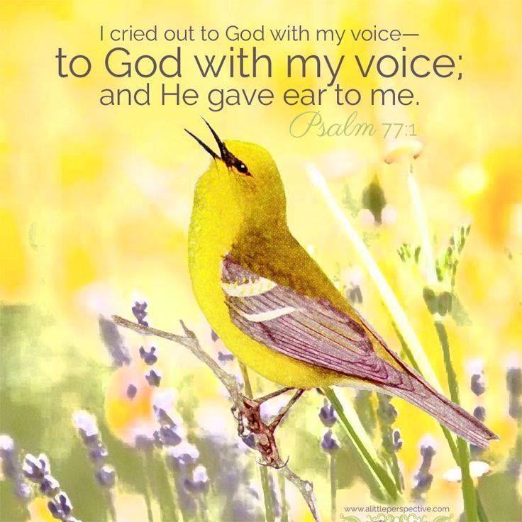 2408722632c2738cecd0db921f553eef--psalm---god-first.jpg