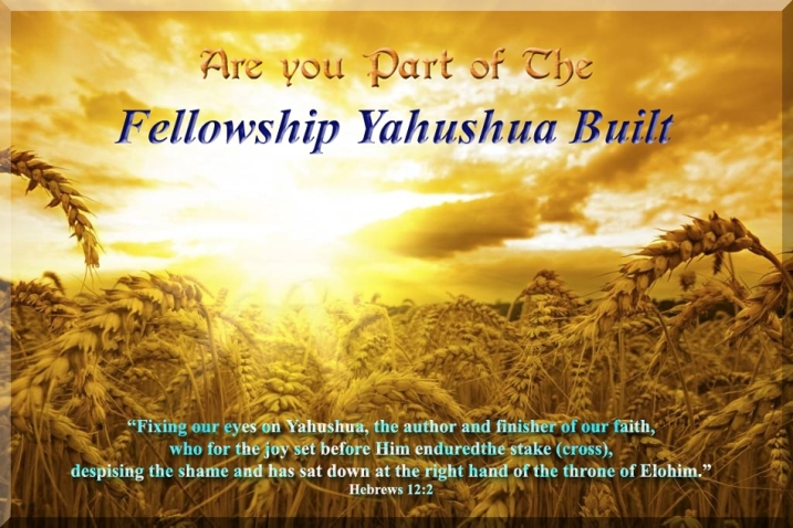 Fellowship-Yahushua-Built.jpg