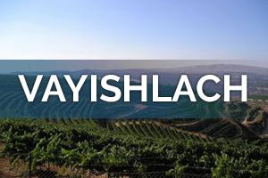 vayishlach_300x200